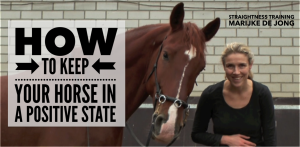 how-to-keep-your-horse-in-a-positive-state