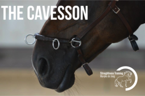 the-cavesson